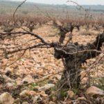 La Tienda de Vino apuesta por los Vinos de Madrid