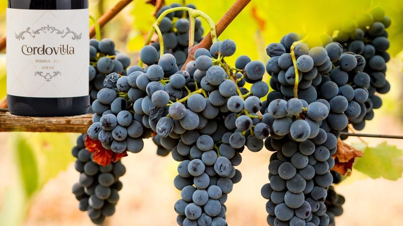 vinos syrah madrid
