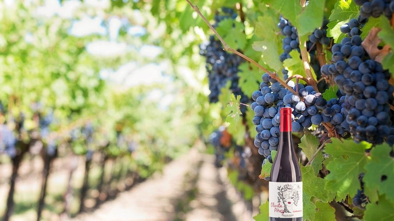 vinos garnacha madrid