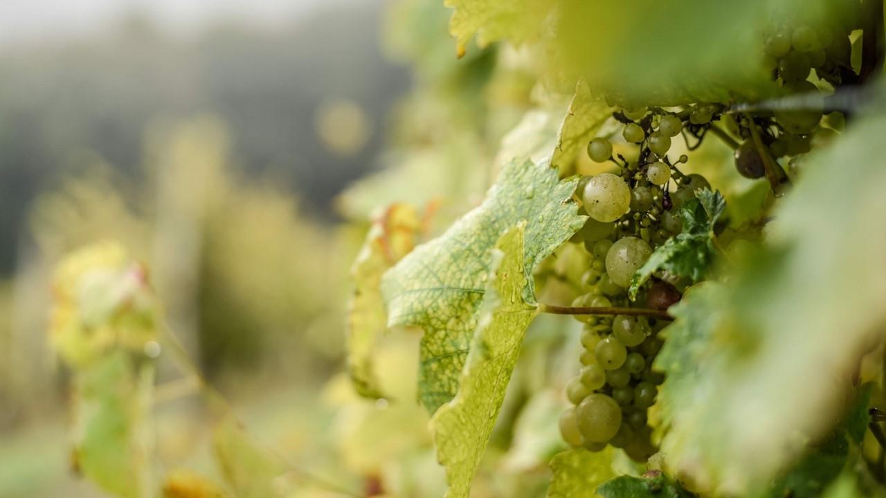 vinos albillo madrid