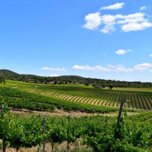 Nueva Valverde Bodegas, los vinos más galardonados de la Comunidad de Madrid