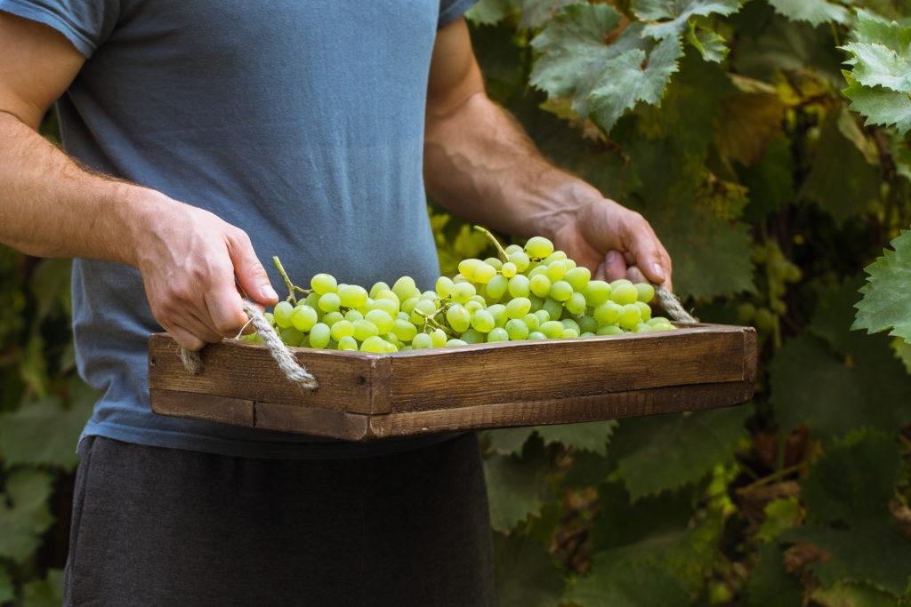 Vinos de Madrid. Vinos ecológicos, vinos biodinámicos y vinos naturales